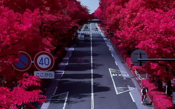 赤外線をとらえる特殊なカメラで撮影すると、街路樹の葉緑素が赤く染まる