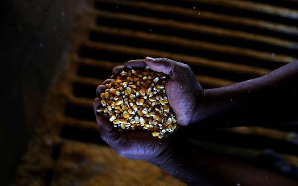 ブラジル産トウモロコシの減産観測が広がっている=ロイター