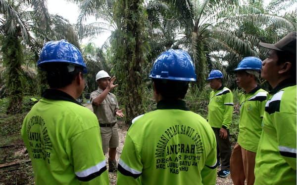 植林方法を指導する花王のパーム油調達先のアジアン・アグリの指導員(インドネシア・スマトラ島)
