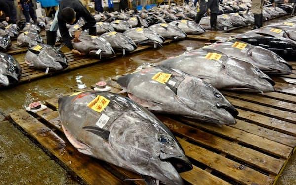 マグロの漁獲枠が担い手育成の障壁となっている