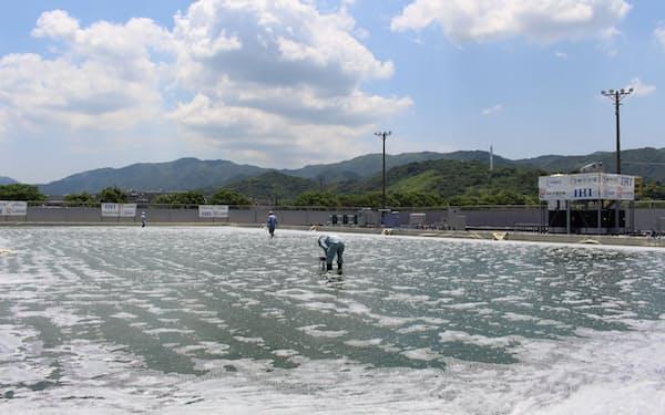 微細藻類ボツリオコッカスの大量培養試験(鹿児島県、IHI提供)