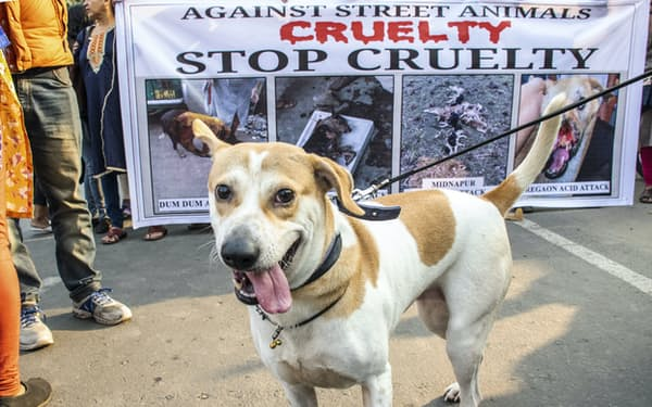 インド各地で動物との共生の仕方をめぐり、住民が対立している(写真は西ベンガル州の2020年の動物虐待反対運動)=AP
