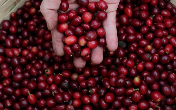 コーヒーの産地であるブラジル南部は歴史的な寒波にみまわれている(サンパウロ)=ロイター