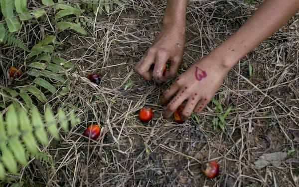 買収先が児童労働に関与していないか慎重な精査が必要だ(インドネシアのパーム畑)=AP