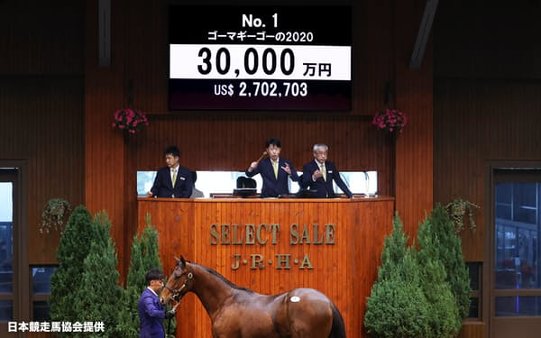 セレクトセール1歳部門の最高価格3億円で売却されたディープインパクト産駒「ゴーマギーゴーの2020」=日本競走馬協会提供