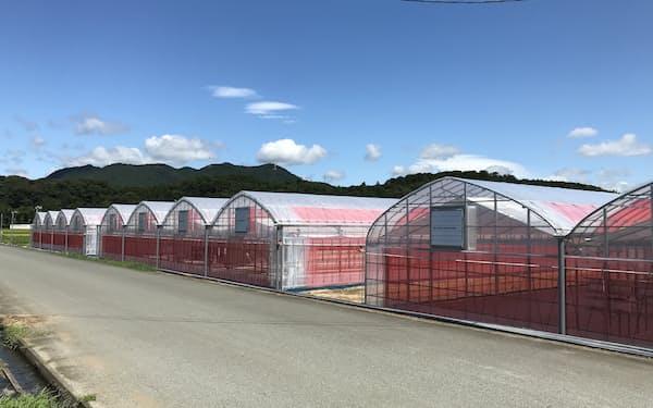 ハウスを増設しトマトやマイクロリーフなどの栽培を拡大している(三重県多気町)