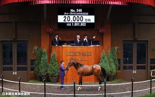 セリ市場に最後に登場したディープインパクト産駒「スイープトウショウの2020」=日本競走馬協会提供