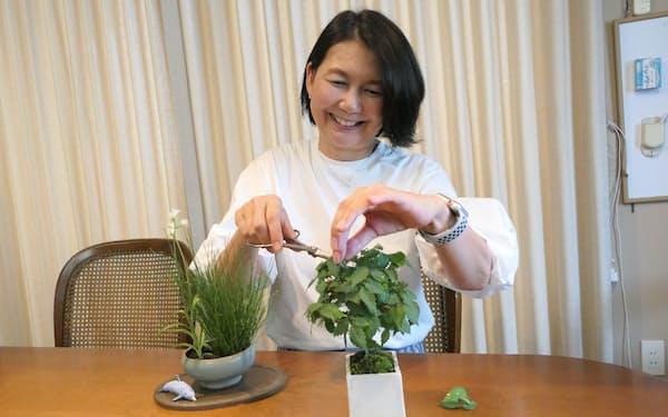 門倉三樹さんはケヤキ㊨とサギソウ・ヒメトクサのミニ盆栽を育て、生活の欠かせない一部になっている