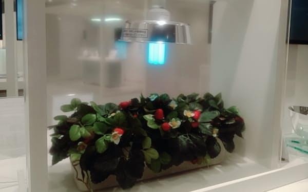 照明技術をイチゴ栽培に応用する