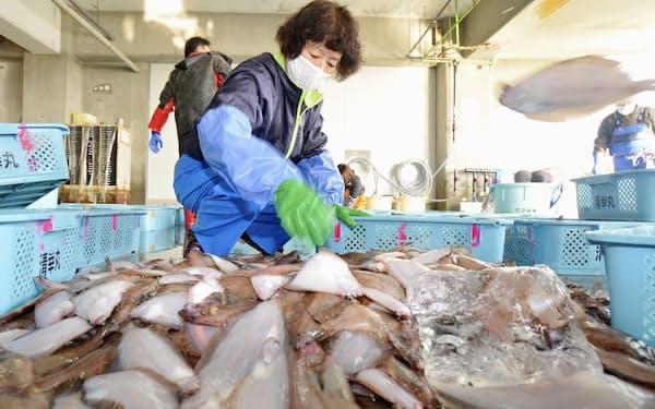 処理水の海洋放出で風評被害が懸念される=1月、福島県いわき市の魚市場=共同