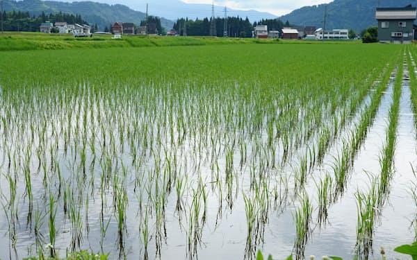 米需要の減少が大きく影響した