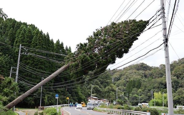 台風15号の被害で倒れた木(19年9月、千葉県君津市)