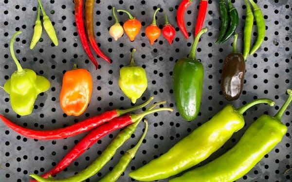 農業法人の十色が育てた色とりどりのトウガラシ