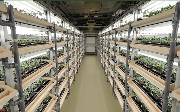 ベルグアースは新棟の本格稼働でウリ科苗生産の安定を図る
