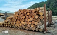 商品全面高に変調 木材や原油下落、アルミは高値