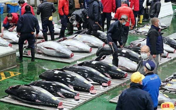 漁獲枠の設定や違法漁業の取り締まりが奏功した(1月、豊洲市場)