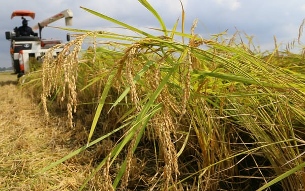 収穫されるコシヒカリ(千葉県内)