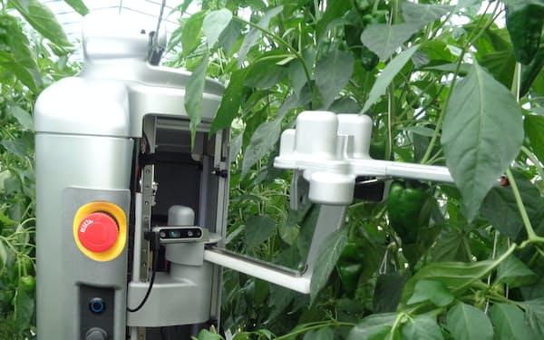 収穫ロボットがアームを伸ばし、ピーマンを収穫(宮崎県新富町)