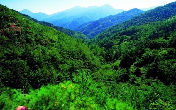 住友グループ発祥の地・愛媛の別子銅山での植林活動が、住友林業のルーツだ