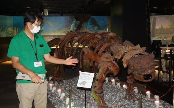 草食恐竜「エウオプロケファルス」の全身骨格標本など迫力満点