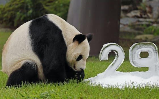 29歳の誕生日を迎えたジャイアントパンダの永明(14日、和歌山県白浜町のアドベンチャーワールド)=共同