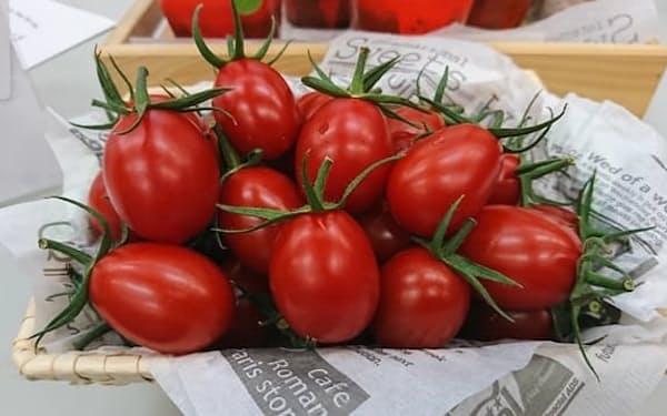 ゲノム編集でGABAの含有量を増やしたトマト「シシリアンルージュハイギャバ」