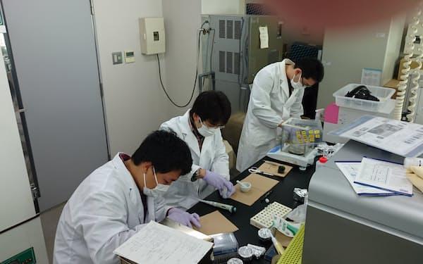 遺伝子配列を解読するためタマネギから試料を抽出する=執行教授提供