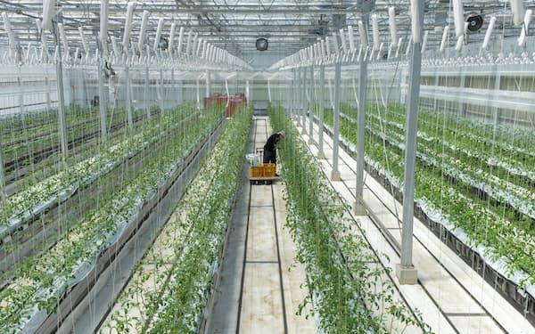 広島県三原市の農場では自社肥料だけで作物を育てている