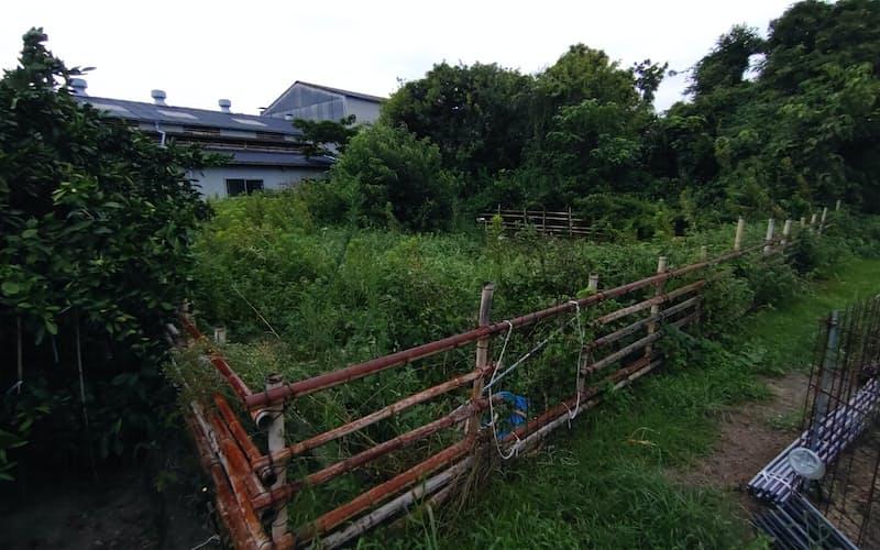 雑草や低木が生い茂る耕作放棄地(山口県)