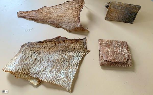 魚の皮と革小物。(左上から時計回りに)マゴチの皮、マダイの名刺入れ、ハマチのコインケース、マダイの皮=共同