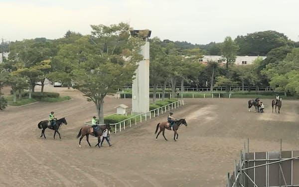 美浦トレセンのスタンド前を歩く馬たち