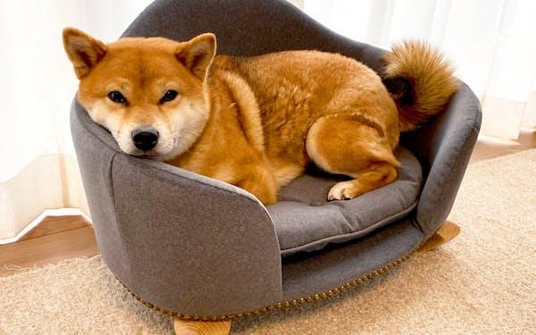 家具メーカーのシノハラ製作所が北九州市と組んで開発したペット用ソファ