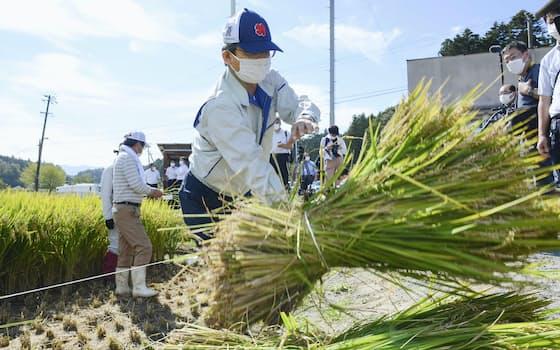 福島県双葉町で、福島第1原発事故後初の稲刈りをする町民ら。収穫したコメは県が放射性物質濃度を測った後に廃棄され、市場には流通しない(22日)=共同