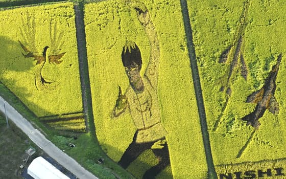 宮城県角田市で見ごろを迎えた、フィギュアスケート男子の羽生結弦選手が描かれた「田んぼアート」。企画した「西根田んぼアートを楽しむ会」担当者によると、白かった衣装の稲穂は色づき、今月上旬から黄金色に。「北京でも