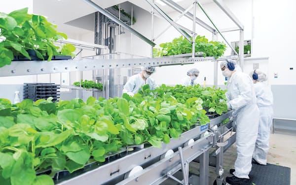 田辺三菱のカナダ子会社メディカゴはタバコ属の植物を使ってワクチンを製造する