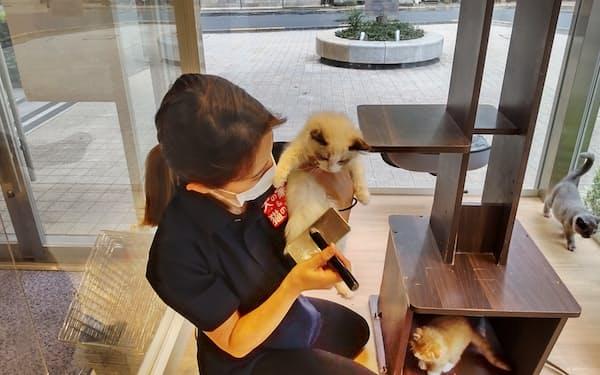 「犬の家&猫の里」新宿店ではペットたちが丁寧にブラッシングされている