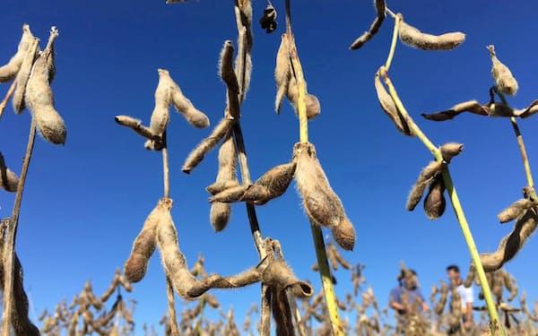 「ラニーニャ現象」が農作物相場の急騰リスクに(ブラジルの大豆畑)=ロイター