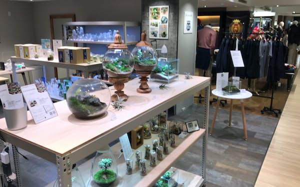 松屋銀座店が8月に紳士フロアに設けたコケ売り場。テレワークでの癒やしニーズを狙う
