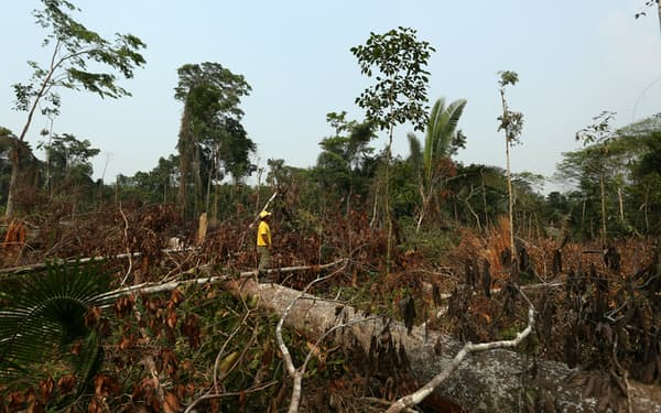 生態系の保全を軽視する企業は淘汰される時代に(ブラジルで荒廃した森林)=ロイター