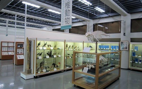 大学博物館ならではの、貴重でユニークな資料が並ぶ=琉球大学博物館 風樹館提供