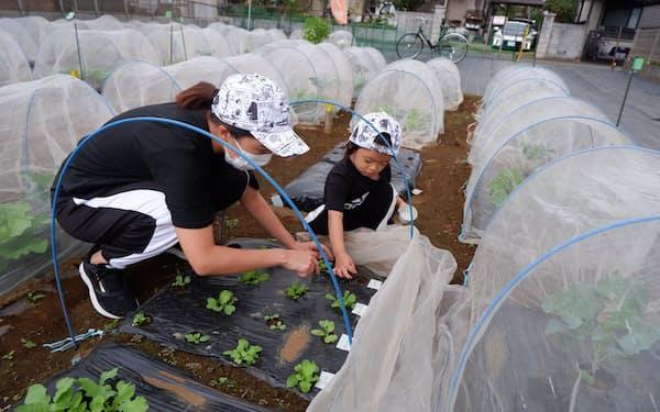 貸農園で野菜作りを楽しむ葛巻さん親子(東京・練馬)
