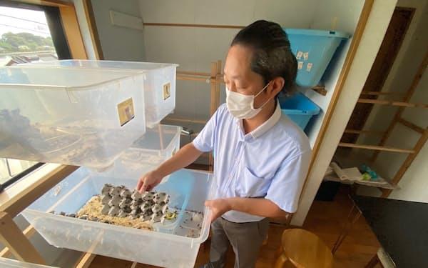 バグズウェルはコオロギの養殖を本格化する(長崎県西海市)
