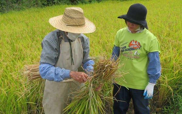 刈り取った稲の束ね方を阿部さん㊨に説明する谷藤さん(9月22日、秋田県東成瀬村)
