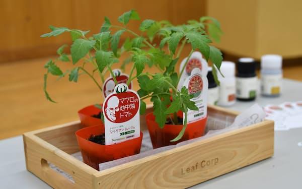 苗木販売でゲノム編集トマトの浸透を図る