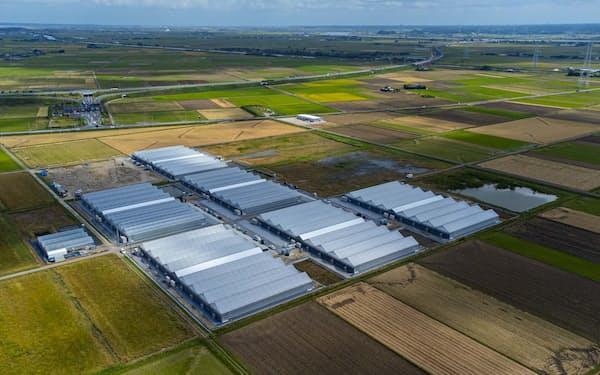 農業事業の拡大の一手とする(OSMICの農場)