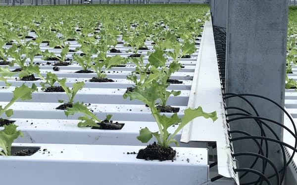 「美里グリーンベース」では種まきから栽培まで自動化している(宮城県美里町)