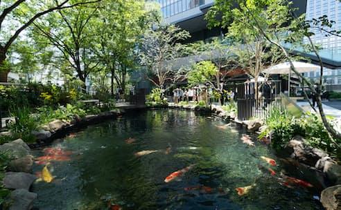 地方の魅力を発信するトウキョウトーチ。広場内の鑑賞池には新潟県小千谷市の錦鯉が泳ぐ