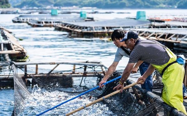 赤坂水産は海外市場を見据えたブランドマダイの開発を進める