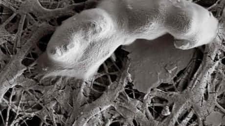 火星に生命は? 地中深くの極限環境微生物に期待