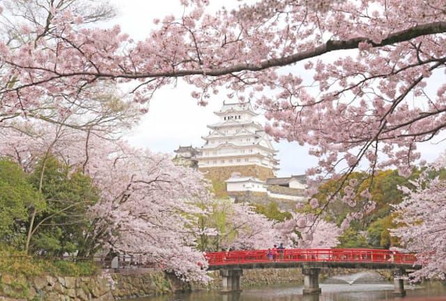 保存修理工事を経て、自然な美しさを取り戻した国宝「姫路城」。93年に世界文化遺産に登録。大天守に満開の桜が映える(画像提供:姫路市)